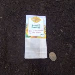 Samenkugel / Seed Bombs
