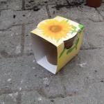 Naturpot - Werbepflanzenset