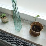 Naturbag und Naturpot – Pflanzsets