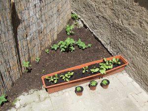 Ein Quadratmeter Garten