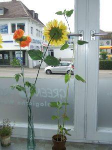 Naturpot - Sonnenblume